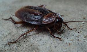 Zwalczanie karaluchów w Warszawie