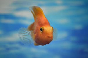 Read more about the article Wyposażenie do domowego akwarium