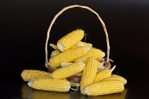 Dobrze mieć odpowiedni nawóz do kukurydzy